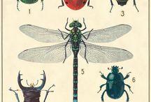 Old biological diagrams