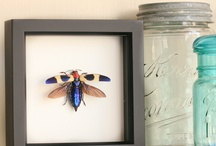 Insects in frames