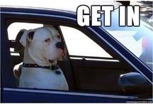 LOVE American bulldogs!