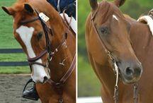 Everything horses