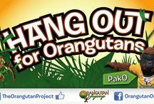 PakO / PakO's Adventures to raise awareness and funds to help save the Orangutans and their rainforest homes. #pako