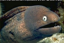 Popular Memes / Humorous memes / by MemeGuy