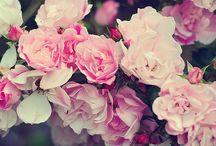 Flowers / Vintage flower Images