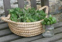 Wildkräuter-Kalender Juni / Wildpflanzen-Erntekalender für den Monat Juni