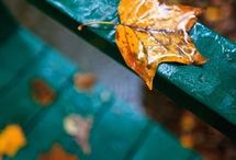 Colors of Autumn...Turquoise and Orange / by Sandy Beck