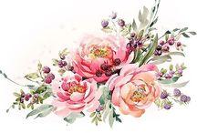 aquarelle virágok