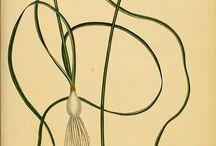 Botanische Illustaties / by mina bakgraag