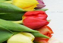 Spring&flowers