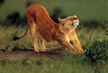 Animals / by Sharon Gosling