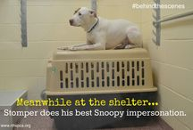 Behind the Scenes at the Shelter