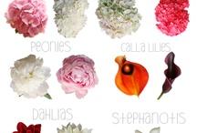 Blomster navne