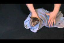 Katten en tips