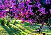 paisaje de flores