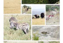 Kenya Safari / My Safari in Kenya with Hot Air Balloon