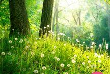 Lugares de primavera / ¿A cuál de estos lugares te gustaría viajar en esta primavera?