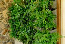 Vertical garden for alfresco