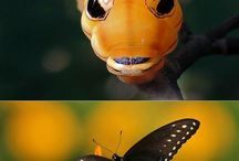 Butterly''s