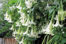 Plants: White