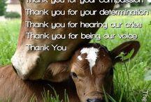proud to be vegan
