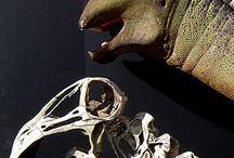 fosilie     paleo