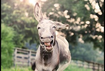 Donkeys (Pedro) / by Stephanie Wilson