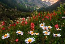 Flowers Landscapes