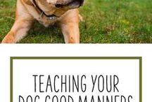 Dog tips/training etc