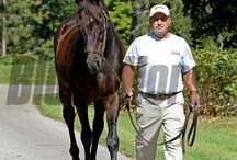 Pensioned Stallions: The Old Guard / Blood-Horse visuals director Anne M. Eberhardt and features editor Lenny Shulman recently visited with some of Central Kentucky's most celebrated senior citizens. / by The Blood-Horse