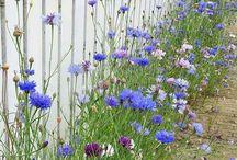 łąki w domowych ogrodach