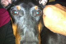 My Dogs Calypso&Merlino