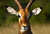 Africa animal wildlife
