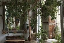Planter i interiøret