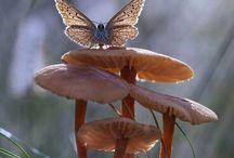 Грибы и насекомые