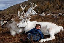 Mongolië Reizen Nomad&Villager / Ook zo geïnspireerd door Mongolië als wij? Hier vind je onze verhalen, inspiratie, beelden en foto's.