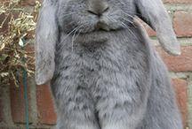 Kanit - Rabbits
