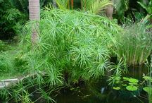 Mis plantas / plantas de mi jardin