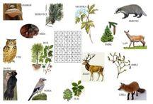 Veda a príroda