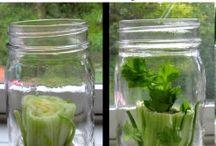 GROW your food / by Aimee Doyle