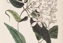 Botanical & Zoological prints
