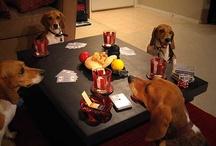 Animals gambling