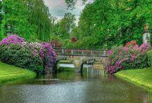 ormanda çiçekli köprü