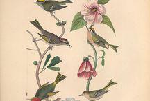 old birds