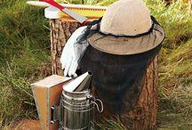 beekeeping / by Wendy Blair
