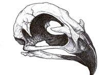 skeletri