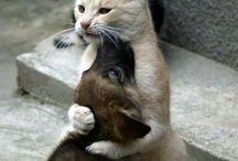Animales y mascotas
