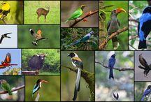 Wander Land Wildlife / Bird and Animals seen around the campsite
