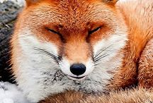 FOXIS