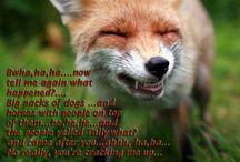 The Foxy Hunt / Everything Fox Hunting
