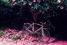 Le Vélo / Bikes