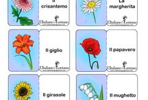 flash card fiori